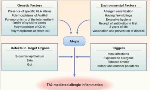 Bagaimana Alergi Terjadi